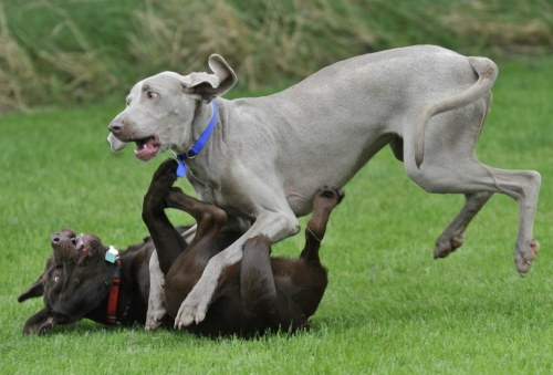 Aggression to other dogs 1