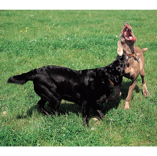 Aggression to other dogs  2