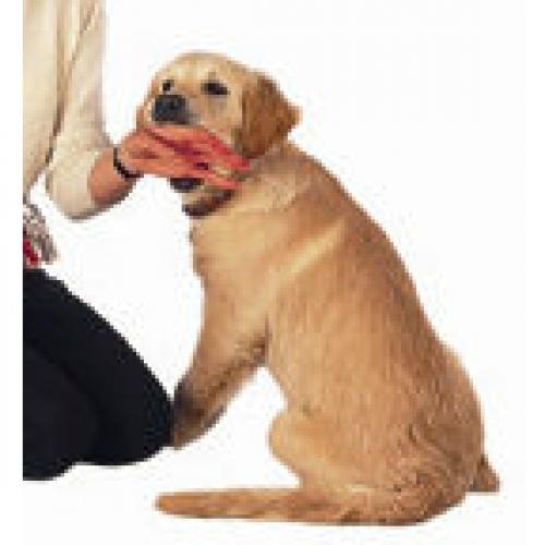 Play biting