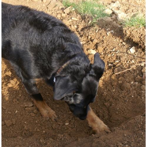 Digging 6