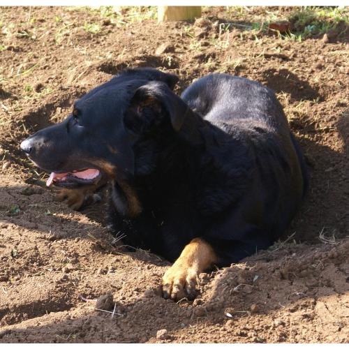 Digging 8