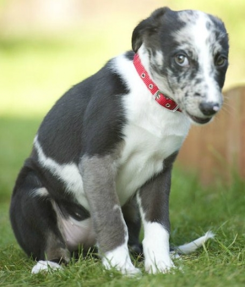 Puppy growling 1