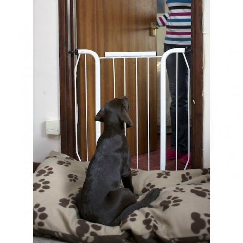 Separation problems in puppies 2