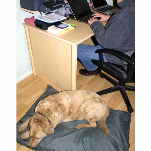 Taking your dog to work 1