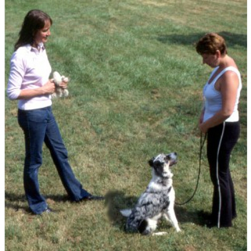 Choosing a good dog training class 2