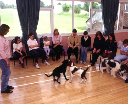 Choosing a good puppy training class 1