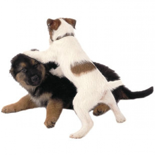Choosing a good puppy training class 2